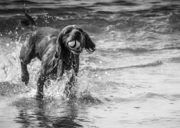 黑白狗狗摄影图片(11张)