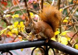 树干上的松鼠图片(14张)