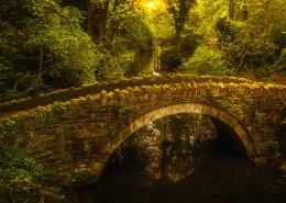 树林里的拱桥图片(11张)