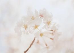 清新淡雅的花朵图片(9张)