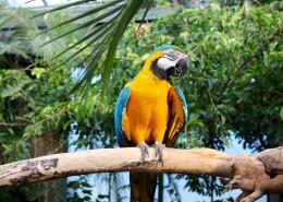 羽毛鲜艳的鹦鹉图片(17张)