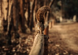 可爱呆萌的松鼠图片(14张)