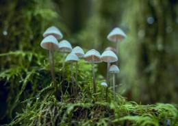 郊外的野蘑菇图片(12张)