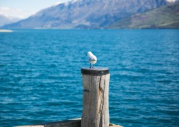 海鸥的特写图片(13张)