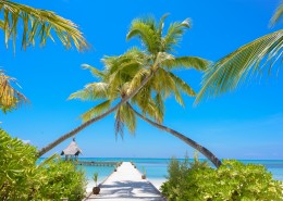 热带椰子树图片(10张)