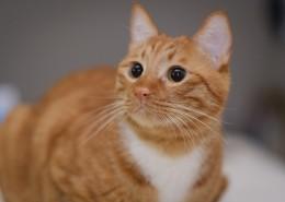 呆萌的橘猫图片(10张)