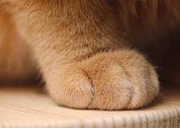 毛绒绒的猫爪子图片(11