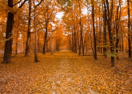 深秋的树林图片(10张)