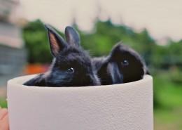 可爱的胖兔子图片(10张)