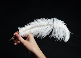 洁白轻盈的羽毛图片(9张