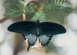 美丽的蝴蝶图片(19张)