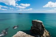 新西兰奥克兰鸟岛风景图片(10张)
