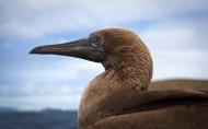 科隆群岛上的动物图片(10张)