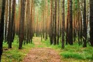 美国加州森林路径风景图片(19张)