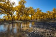 内蒙古额济纳胡杨林风景图片(11张)