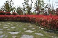 大蜀山森林公园风景图片(12张)