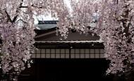 日本宫岛风景图片(16张)