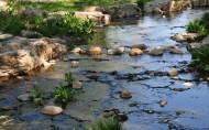西沽公园风景图片(13张)