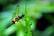 新加坡双溪布洛自然公园风景图片(22张)