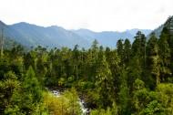 西藏南伊沟原始森林景观图片(17张)