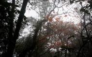 金秀圣堂山风景图片(5张)
