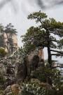 安徽黄山奇松风景图片(16张)