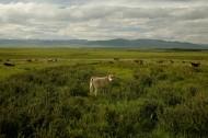 新疆伊犁风景图片(12张)