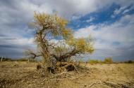 新疆克拉玛依图片(5张)