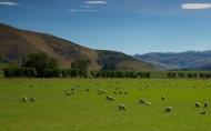 新西兰田园风光图片(14张)