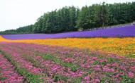 北海道图片(21张)