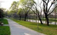 上海共青森林公园风景图片(8张)