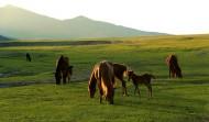 内蒙古扎鲁特风景图片(7张)