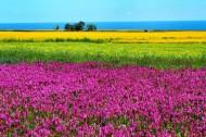 大美青海湖风景图片(12张)