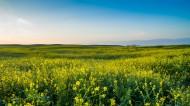 新疆昭苏草原风景图片(17张)