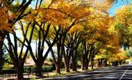 美国犹他州秋景图片(6张)
