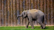 山东济南野生动物园动物图片(9张)