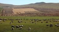 内蒙古呼伦贝尔草原风景图片(14张)