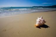 三亚亚龙湾贝壳图片(9张)