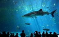 蓝色的海洋馆图片(9张)