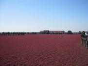 辽宁盘锦红海滩风景图片(10张)