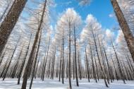 冬日坝上风景图片(17张)