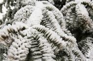 重庆三峡芝兰谷雪景图片(10张)