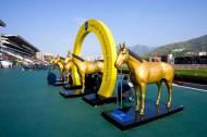 香港沙田赛马场图片(20张)