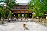 日本奈良风景图片(23张)