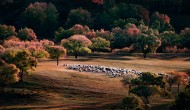 内蒙古乌兰布统风景图片(13张)