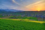 陕西西安鲍旗寨村油菜花风景图片(11张)