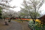 杭州太子湾公园美景图片(26张)