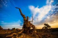 新疆木垒不朽的胡杨林风景图片(16张)