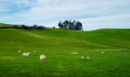新西兰农场风景图片(11张)