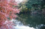 日本新宿御苑的图片(10张)